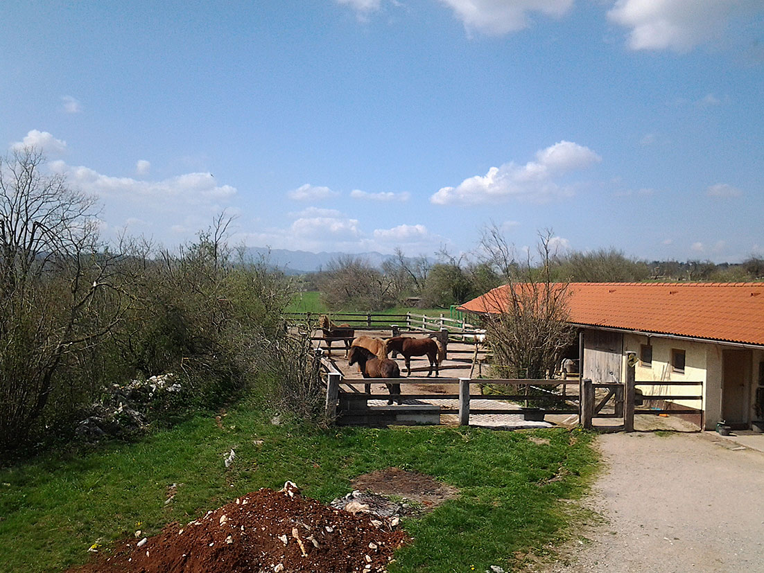 view-to-the-horses